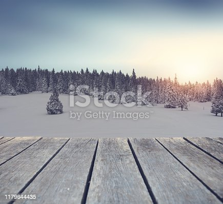 Winter Spruce Forest At Sunset