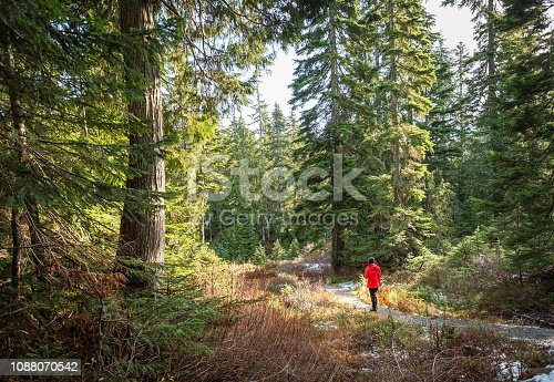 903015102 istock photo Winter Forest Bathing Along Snow Lined Trail, British Columbia, Canada 1088070542