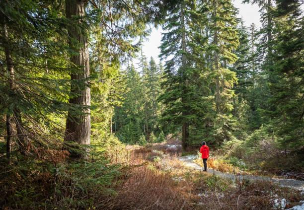 bagno nella foresta invernale lungo il sentiero innevato, columbia britannica, canada - forest bathing foto e immagini stock