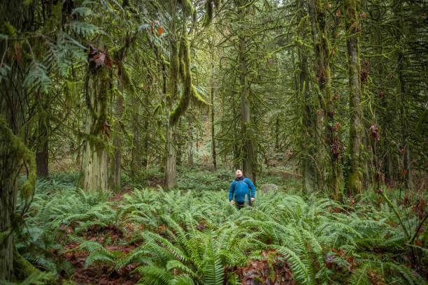 bagno nella foresta invernale, escursioni di uomini maturi guardando gli alberi - forest bathing foto e immagini stock