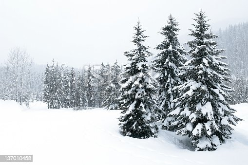forest clearing during winter blizzard (XL)