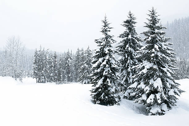 XL winter forest blizzard stock photo