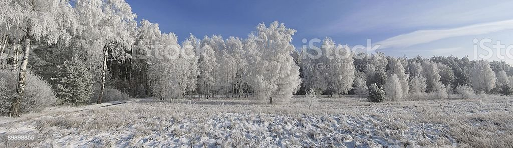 Foresta di inverno bordo foto stock royalty-free