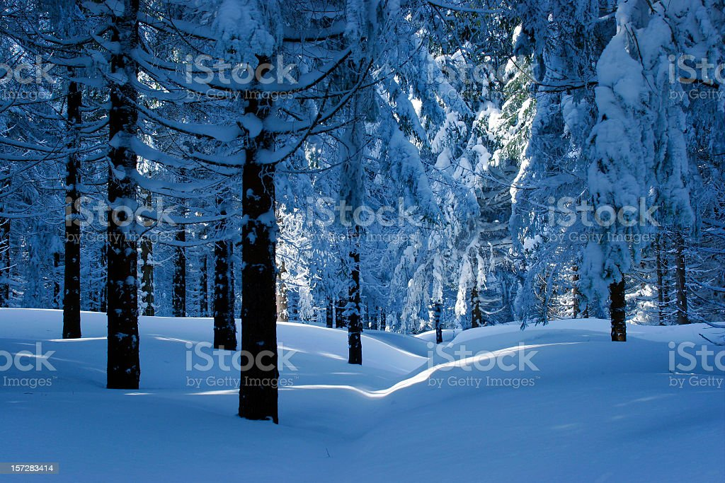 Winter Forest III royalty-free stock photo