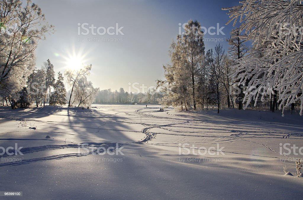 winter forest in snow - Royalty-free Agricultural Field Stock Photo