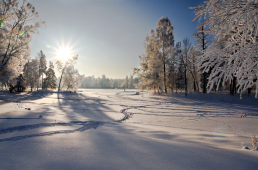 Winter Forest In Snow Stock Photo - Download Image Now
