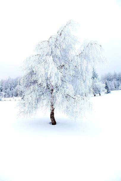 Foresta nella nebbia invernale - foto stock