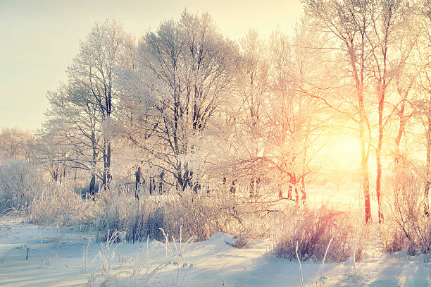 winter forest landscape - winter stock photos and pictures
