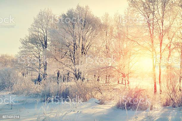 Photo of Winter forest landscape
