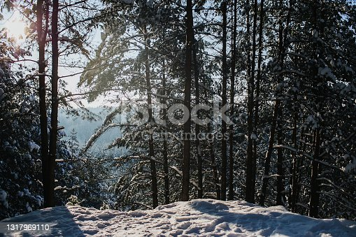 istock Winter forest landscape. Snow in forest. Cold winter weather. Coniferous forest background. Sunlight through the trees. 1317969110