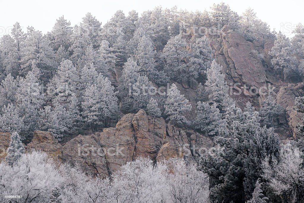 Winter Forest on Rocky Cliff stock photo