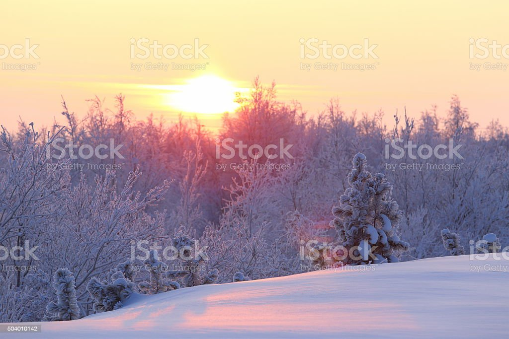 Winter forest on Yamal stock photo