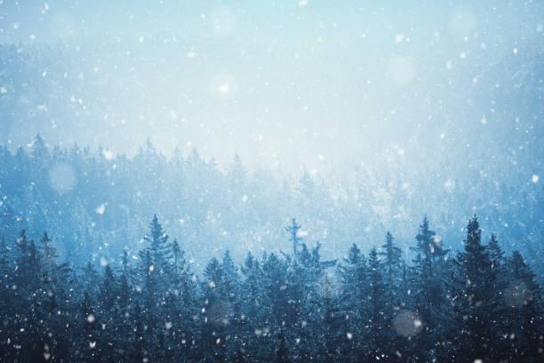 Forêt d'hiver - Photo