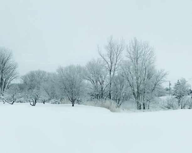 forêt d'hiver - josianne toubeix photos et images de collection
