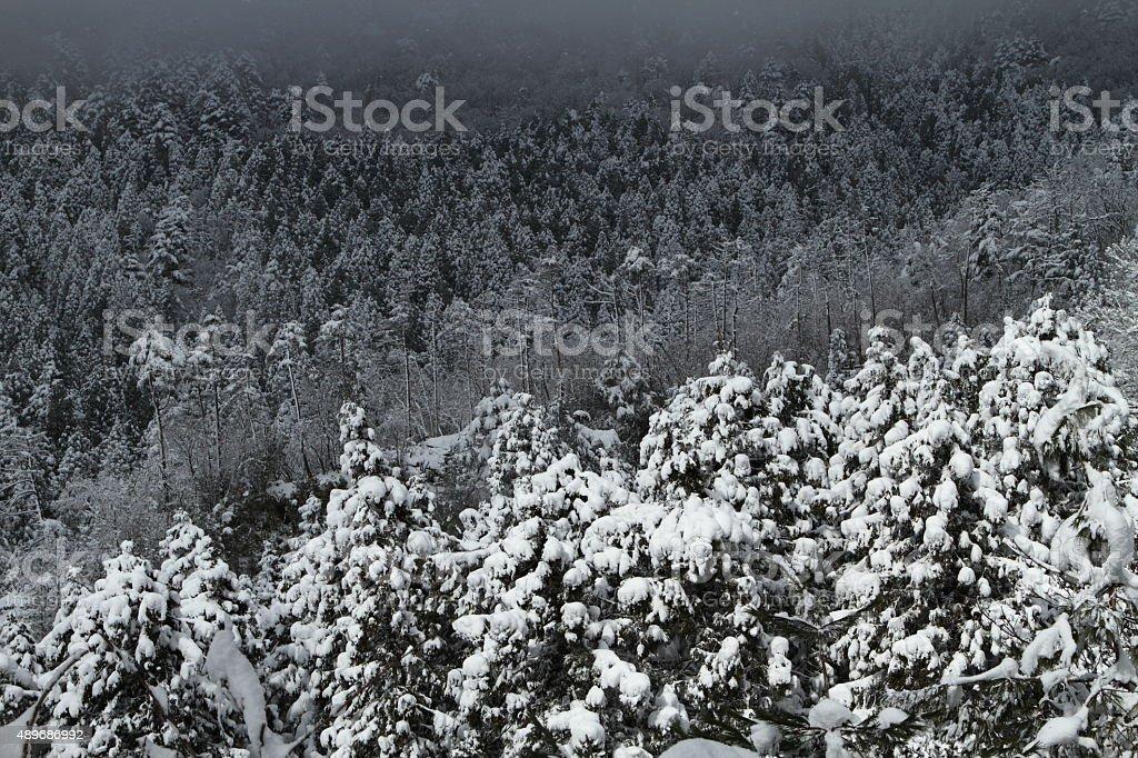 冬の森 ストックフォト