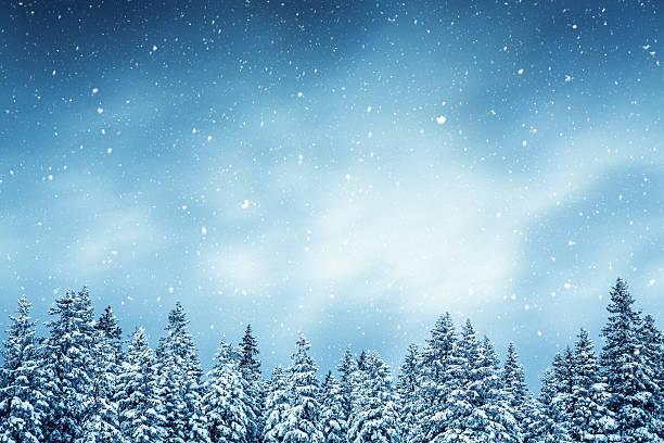 Winter forest picture id490686800?b=1&k=6&m=490686800&s=612x612&w=0&h=0unlunziul ejohkzwbbczdl6w wrplln3mkcrgn2wu=