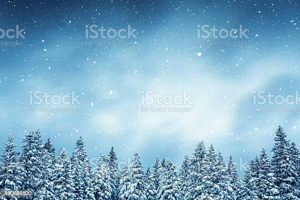 Photo of Winter Forest