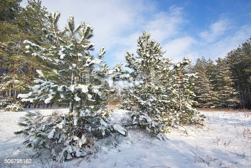 511998996 istock photo winter forest 506798162