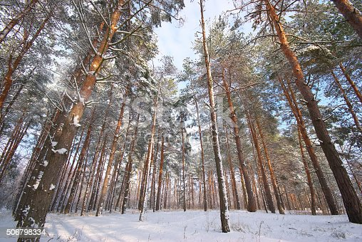 511998996 istock photo winter forest 506798334