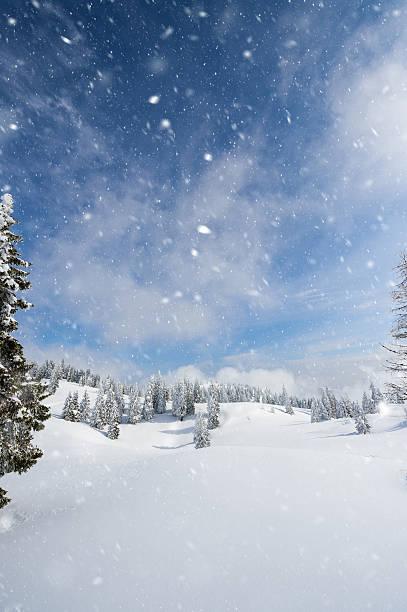 winter forest  - schneeflocke sonnenaufgang stock-fotos und bilder
