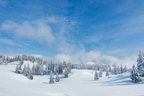 Winter forest  – Foto
