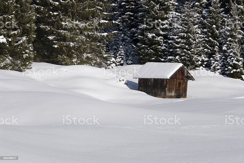 Winter Forest Lizenzfreies stock-foto