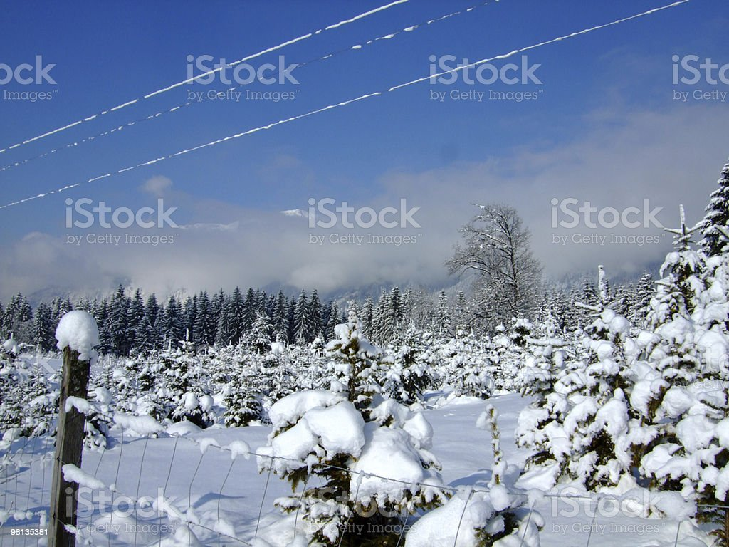 Winter foresta foto stock royalty-free