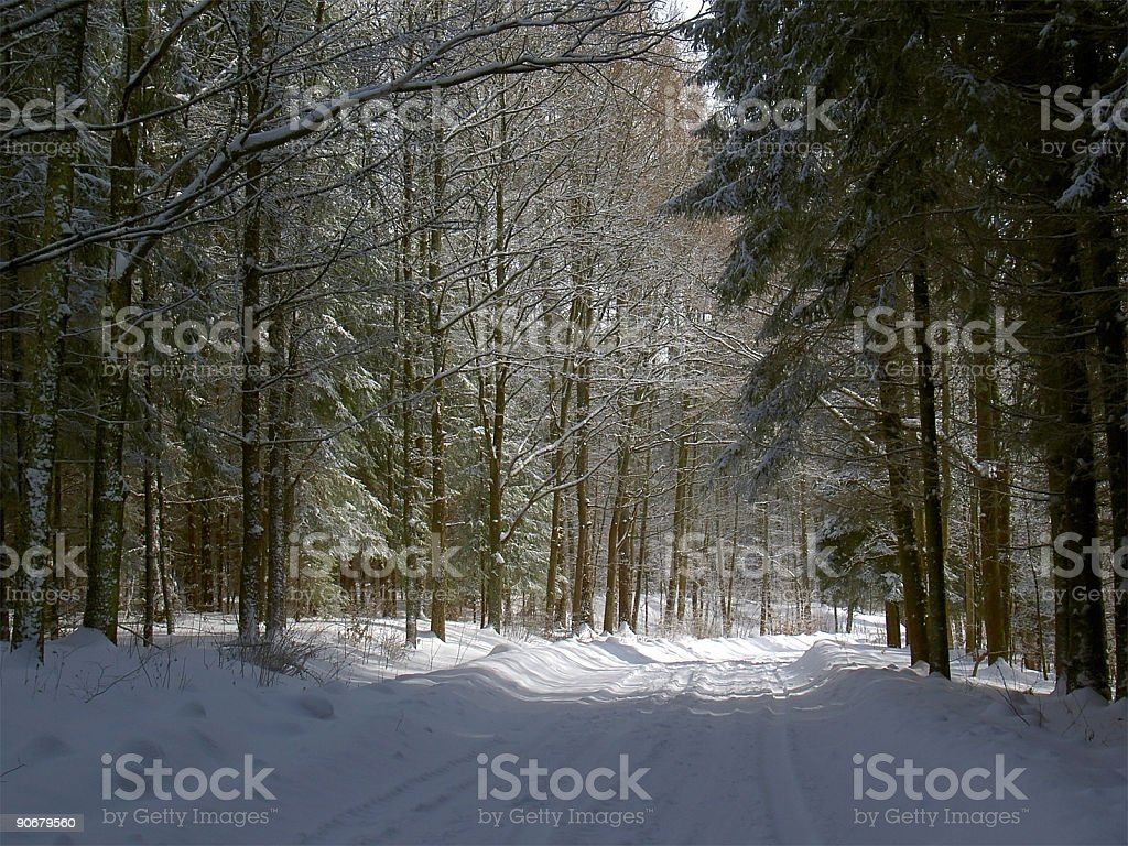 winter forest road stock photo