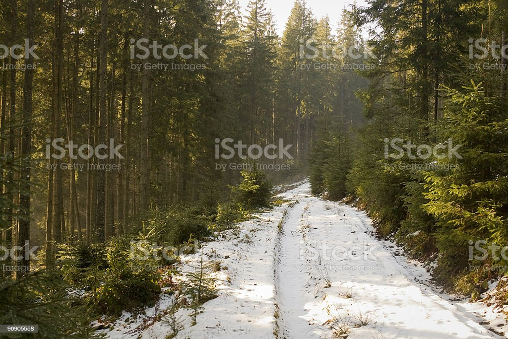 Winter forest road royalty-free stock photo