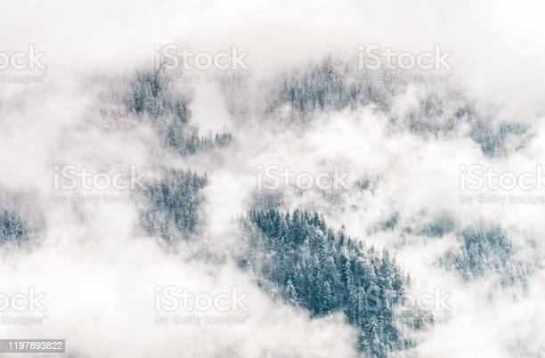 Photo of Winter forest shrouded in mist
