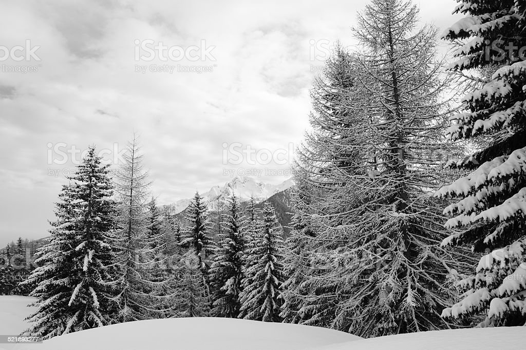 Winter forest, Snowy landscapes stock photo