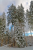 Winter forest under cloudy sky, Harz mountains national park, Germany