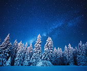 Idyllic snowy winter scene: snowcapped trees under the night sky with shining stars.