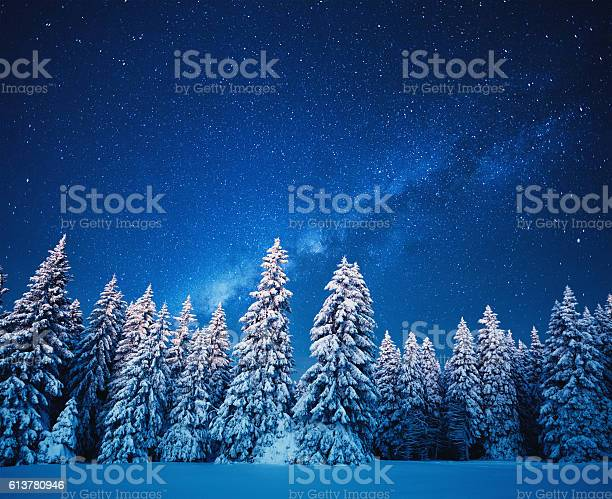 Photo of Winter Forest Under The Stars