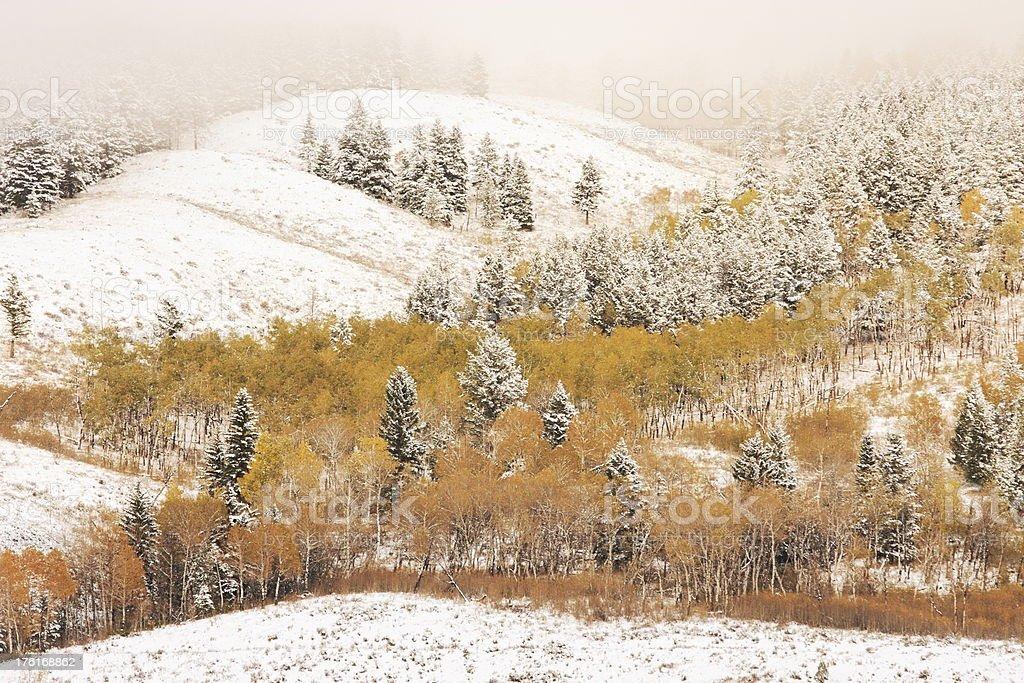 Winter Forest Wilderness Valley Fog stock photo