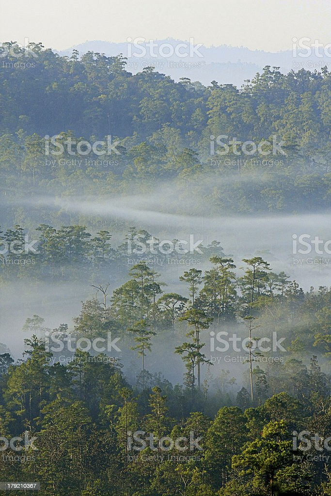 Winter forest with fog, Thailand royalty-free stock photo