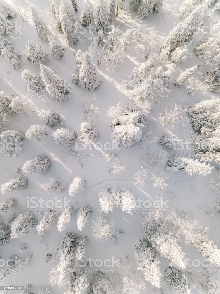 Winter forest with frosty trees, aerial view. Lapland, Finland stock photo