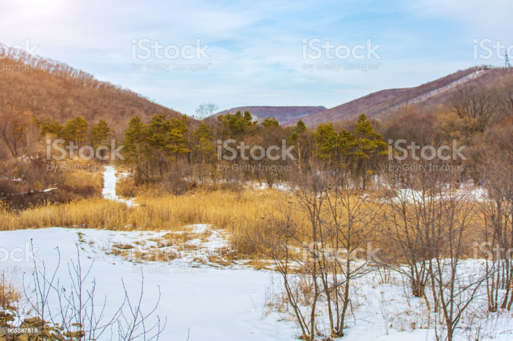 Winter forest with high bridges for the passage of people, Park with animals and bridges for people. zbiór zdjęć royalty-free