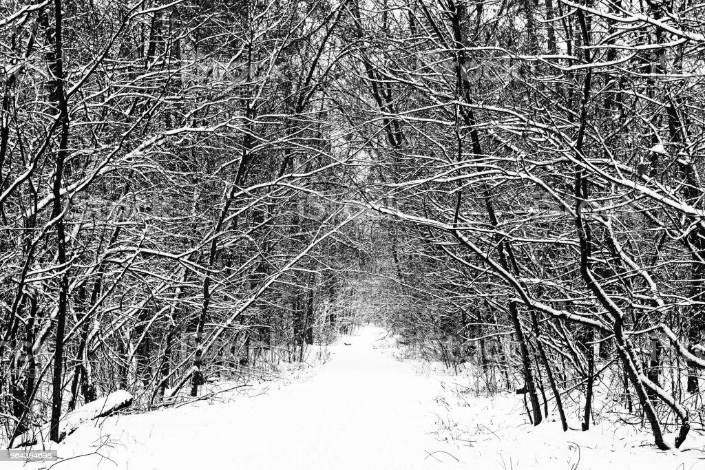 Floresta de inverno com caminho - Foto de stock de Estação do ano royalty-free