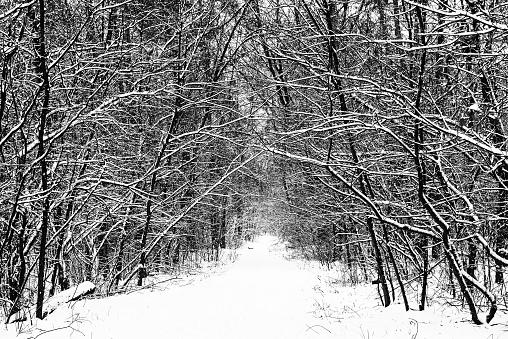 Foto de Floresta De Inverno Com Caminho e mais fotos de stock de Estação do ano