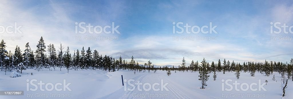 Winter forest with ski track royalty-free stock photo