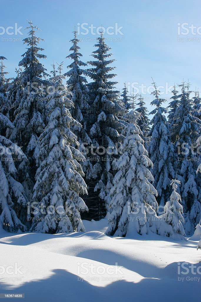 Winter Forest XIII royalty-free stock photo