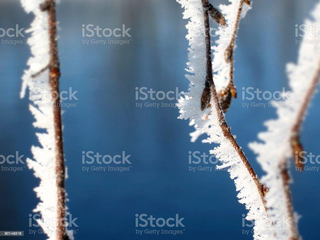 Winter freshness royalty-free stock photo