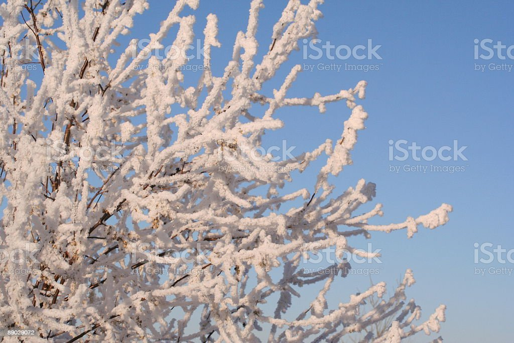 Winter Frost royalty-free stock photo