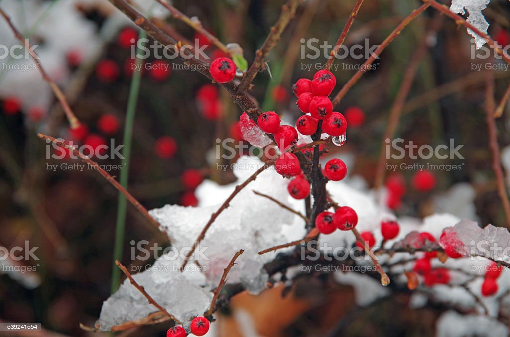 Winter Fruits royalty-free stock photo