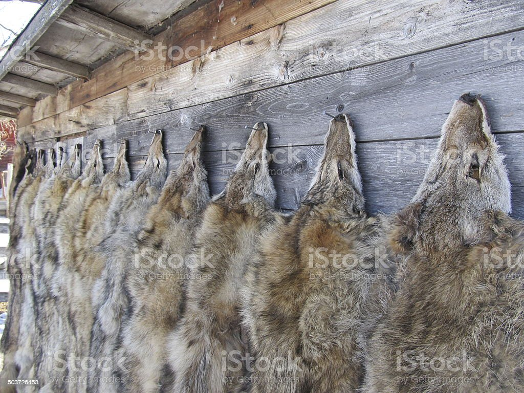 Winter Fur royalty-free stock photo