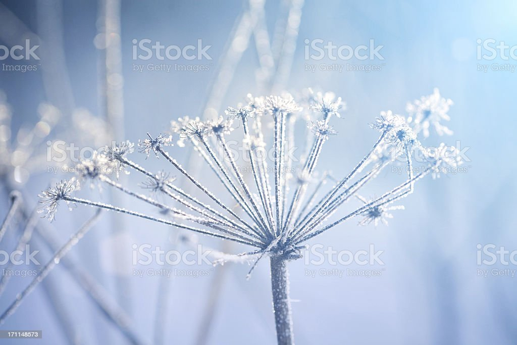 Winter garden royalty-free stock photo