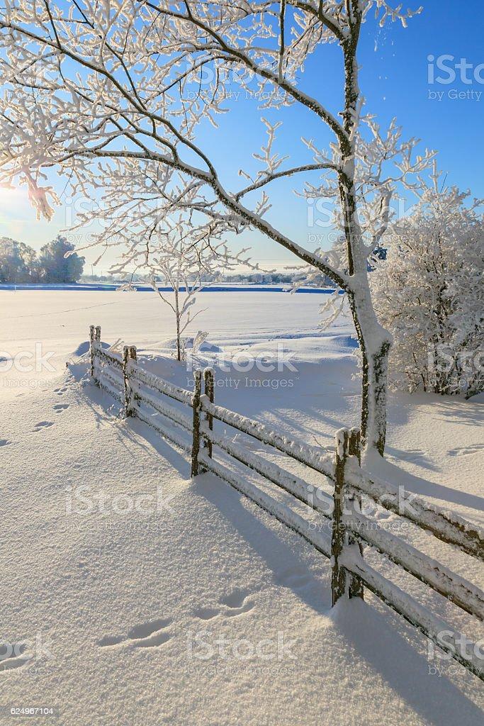 De invierno garden - foto de stock