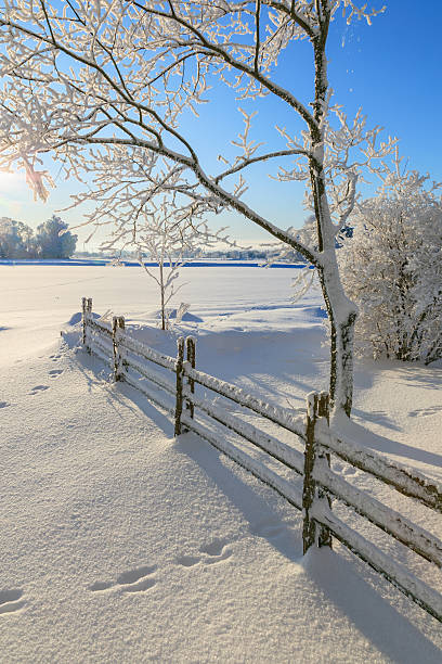Jardim de inverno - foto de acervo