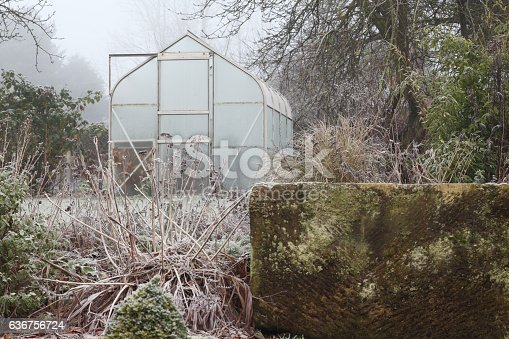 Winter garden with trees stone trough greenhouse frost and fog,